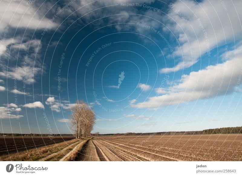 wege übers land. Freiheit wandern Landschaft Erde Himmel Wolken Wetter Baum Feld Sand blau standhaft demütig Bewegung Einsamkeit Kraft Umwelt Wege & Pfade Zeit