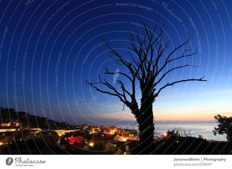 Gudhjem by night Umwelt Natur Landschaft Wasser Himmel Nachthimmel Stern Horizont Sommer Klima Wetter Schönes Wetter Wärme Pflanze Baum Sträucher Park Hügel