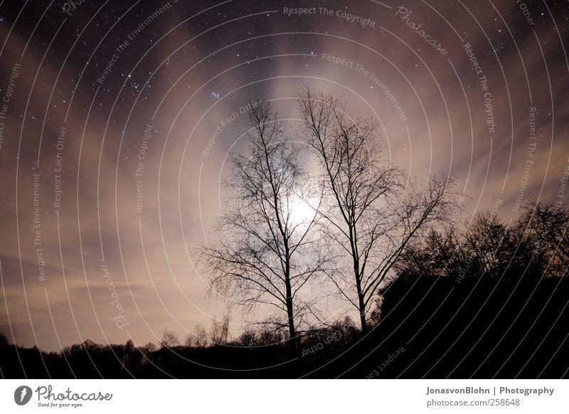 Sterne Himmel Natur Baum schwarz Landschaft braun Abenteuer Hügel Schönes Wetter Mond Nachthimmel
