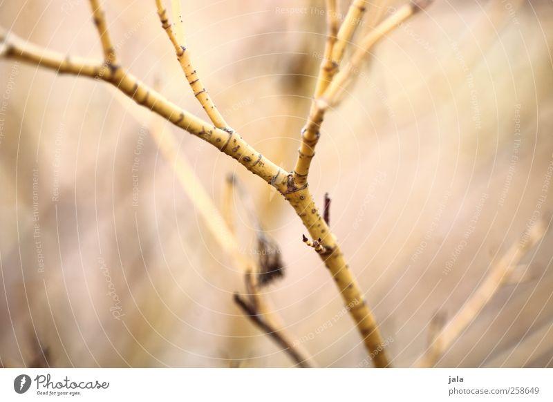 zweig Natur Pflanze Umwelt Garten ästhetisch Sträucher Zweig