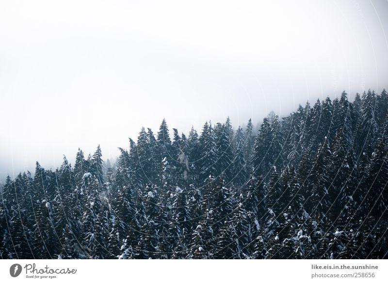 baumgrenze Umwelt Natur Landschaft Urelemente Wolken Winter schlechtes Wetter Nebel Schnee Baum Wald Hügel Alpen Berge u. Gebirge natürlich Baumkrone Waldrand
