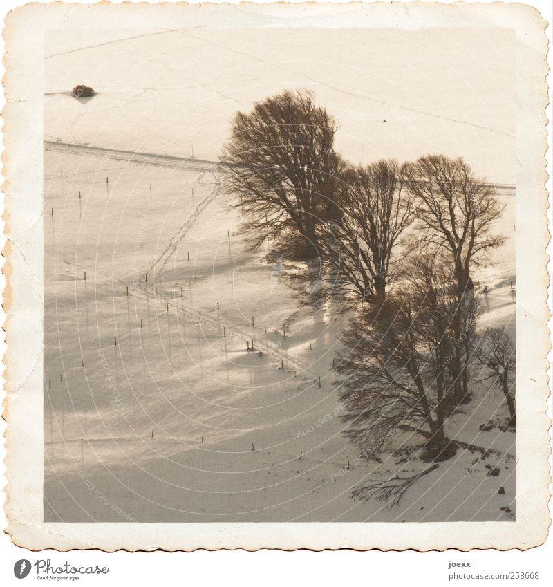Andenken Landschaft Winter Schönes Wetter Schnee Baum Feld Wege & Pfade alt historisch hoch kalt schwarz weiß ruhig Verfall Vergangenheit sepiafarben Fotopapier