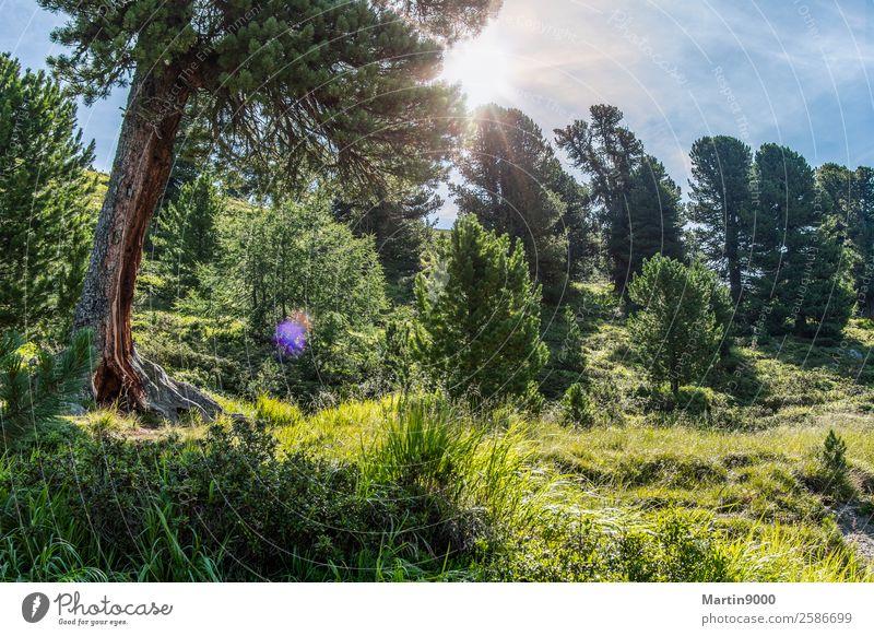 Unberührte Bergwelt I Ferien & Urlaub & Reisen Berge u. Gebirge wandern Tier Luft Himmel Sonne Sommer Schönes Wetter Sträucher Alpen grün Farbfoto Außenaufnahme