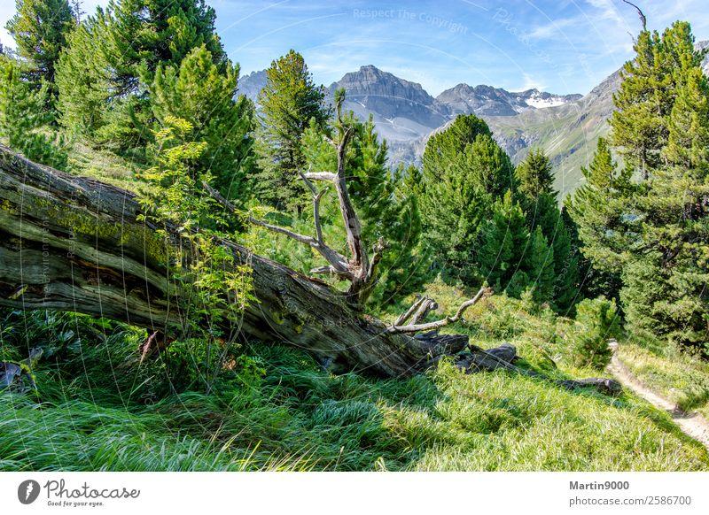 Unberührte Bergwelt II Sonne Berge u. Gebirge wandern Umwelt Natur Landschaft Tier Sonnenlicht Sommer Schönes Wetter Wald Alpen schön blau grün Farbfoto