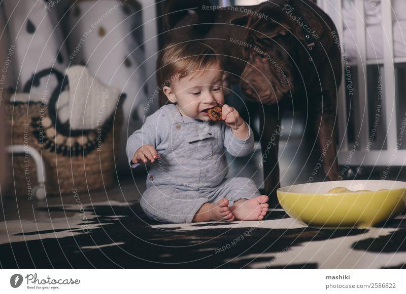süßer kleiner Junge, der Kekse isst und zu Hause spielt. Teller Lifestyle Spielen Winter Schlafzimmer Kind Baby Freundschaft Kindheit Tier Pullover Haustier