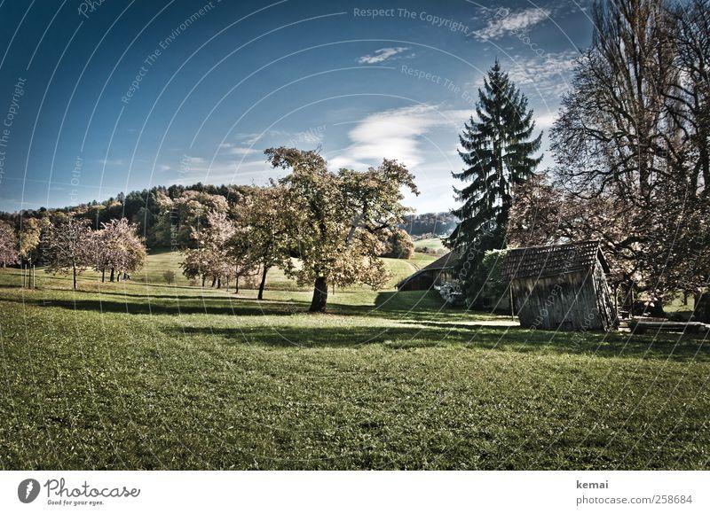 Gartenhütte Himmel Natur grün Baum Pflanze Sonne Wolken Herbst Wiese Umwelt Landschaft Gras Wachstum Idylle Blühend Schönes Wetter