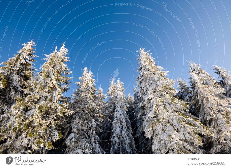 Winterstarre Natur blau weiß schön Baum Ferien & Urlaub & Reisen Winter Wald kalt Schnee Berge u. Gebirge Eis Tourismus Frost Idylle Winterurlaub