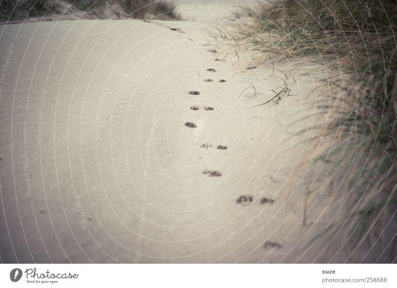 Weg zum Meer Natur Strand Einsamkeit Umwelt Landschaft Gras Wege & Pfade Sand gehen Suche Urelemente Spuren Stranddüne Vergangenheit Düne entdecken