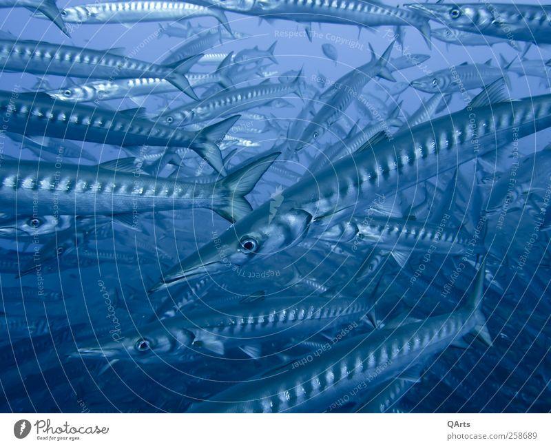 Catch me if you can... Natur Wasser Ferien & Urlaub & Reisen Meer Strand Umwelt Freiheit Schwimmen & Baden frei Abenteuer Insel Tourismus Fisch Fisch bedrohlich Schutz