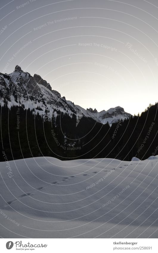 Winteralpen Natur Landschaft Wolkenloser Himmel Schönes Wetter Eis Frost Schnee Baum Berge u. Gebirge Alpstein Gipfel schwarz weiß Fährte Schneespur Abdruck