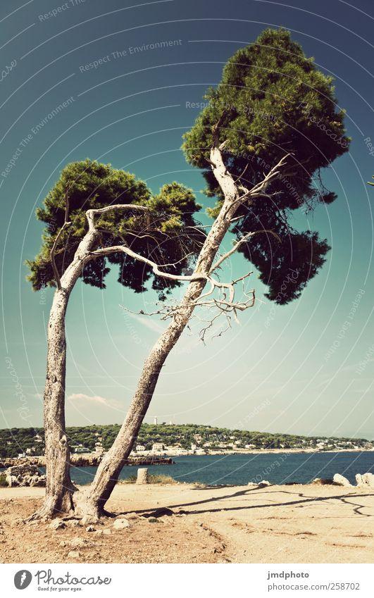 windschnittig Himmel Baum Ferien & Urlaub & Reisen Meer Sommer Strand Ferne Glück Wärme Küste Zufriedenheit Wind Insel Tourismus Warmherzigkeit Lebensfreude