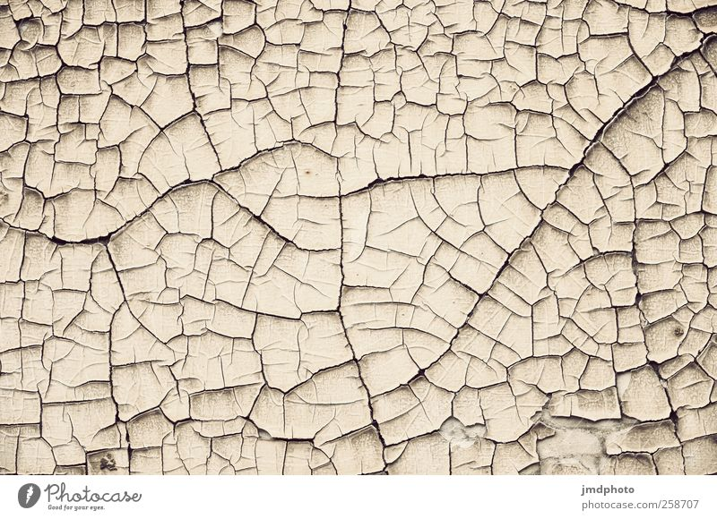 dürre Umwelt Natur Landschaft Erde Dürre Wüste trist trocken Boden Strukturen & Formen vertrocknet gerissen Muster Gedeckte Farben Außenaufnahme Detailaufnahme