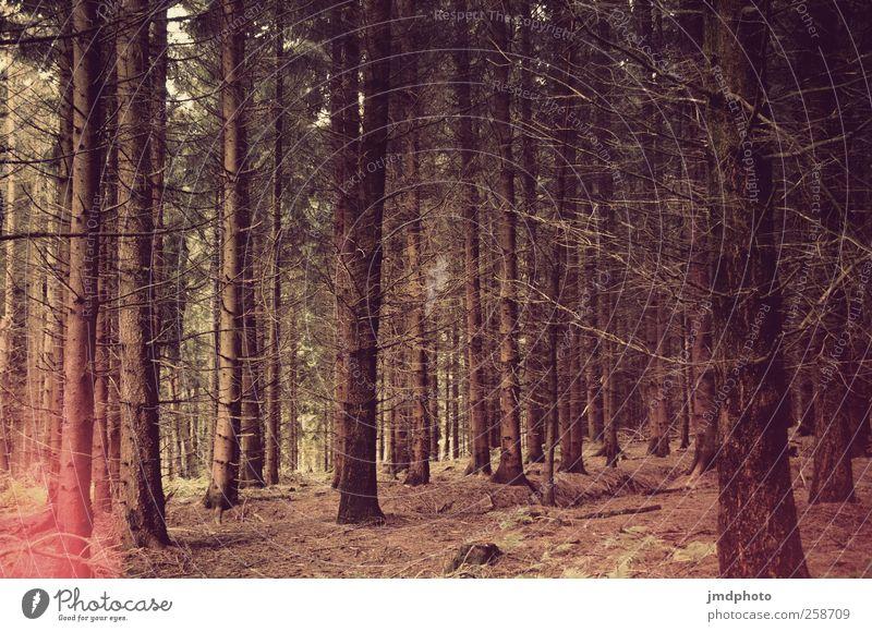 Nadelwald Ausflug Berge u. Gebirge wandern Umwelt Natur Landschaft Tier Baum Wald nachhaltig natürlich Kraft Verschwiegenheit Romantik Gelassenheit ruhig
