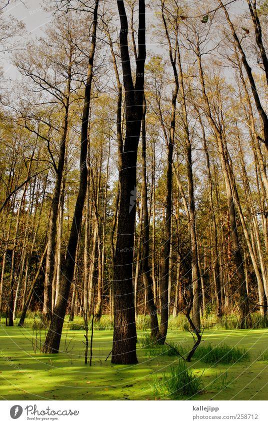 pantone 381 Umwelt Natur Landschaft Pflanze Tier Baum Gras Sträucher Moos Blatt Grünpflanze Wildpflanze Wald grün See Farbfoto mehrfarbig Außenaufnahme Licht