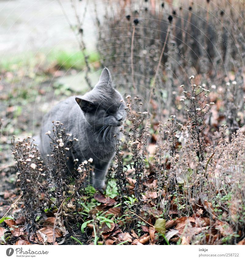 Kräutergarten Katze Tier Herbst Gefühle Garten Stimmung Park Tierjunges natürlich Wachstum Sträucher niedlich Neugier Idylle trocken Blühend