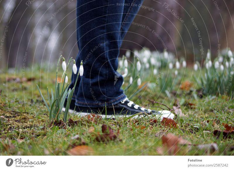 Vorsicht, kleine Schneeglöckchen! Mensch 1 Umwelt Natur Pflanze Urelemente Erde Frühling Blume Gras Moos Blüte Garten Park Wiese frisch nah nachhaltig natürlich