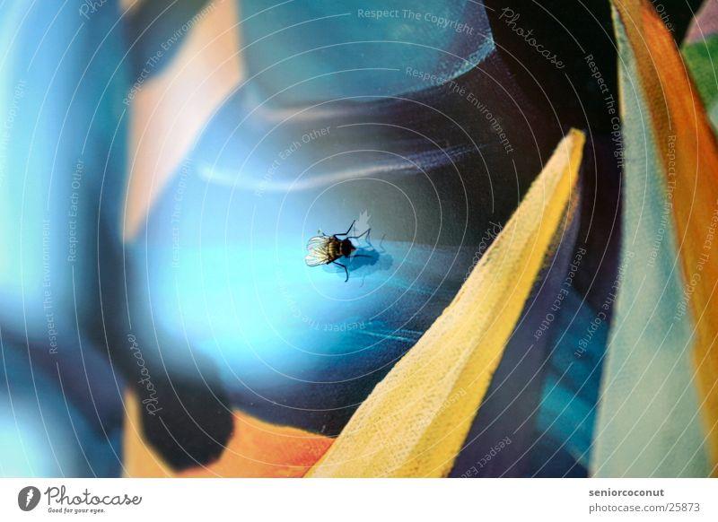 Kunstkenner Beine Fliege Flügel