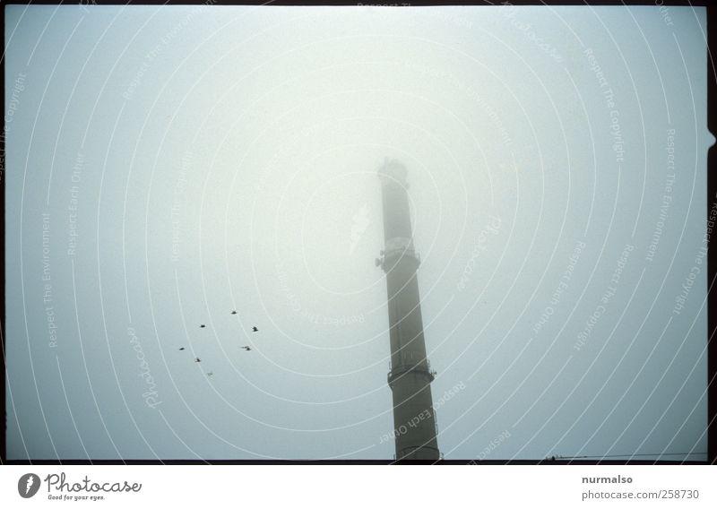 tristes Umwelt schlechtes Wetter Nebel Schornstein Vogel Flügel Schwarm entdecken fliegen frieren Traurigkeit dunkel trashig Stimmung Angst Entsetzen