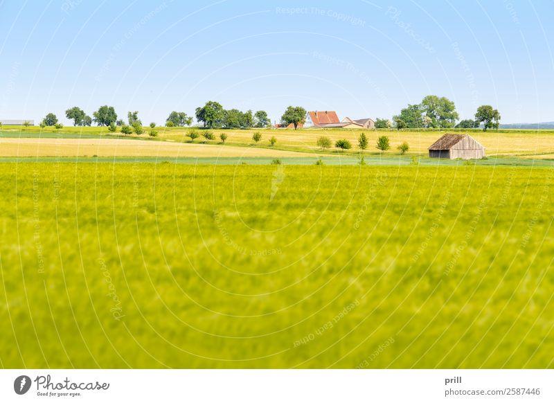 agricultural scenery at spring time Landwirtschaft Forstwirtschaft Landschaft Pflanze Frühling Baum Sträucher Wiese Feld Wachstum nachhaltig friedlich Idylle