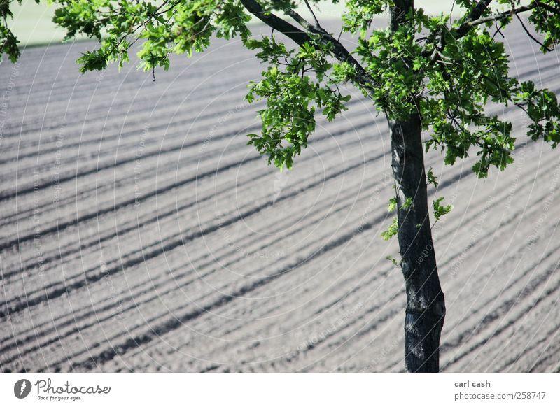 Feld Landschaft Pflanze Erde Frühling Sommer Schönes Wetter Baum ästhetisch einfach Freundlichkeit braun grün schwarz Unschärfe gepflügt Farbfoto mehrfarbig