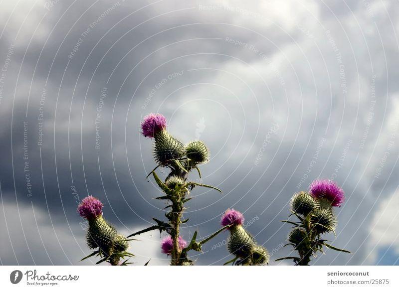Fiese Kerle Vol.1 Wolken Blüte Regen Wetter Stachel
