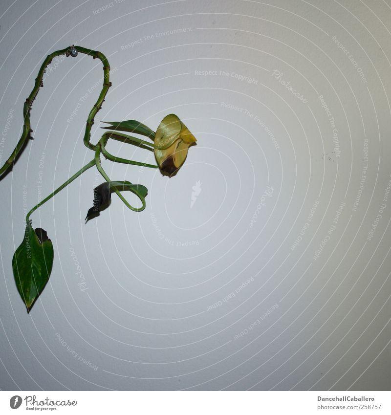 Wanddeko alt weiß grün Pflanze Blatt gelb Tod Wand Innenarchitektur Raum Wohnung elegant Wachstum Dekoration & Verzierung Lifestyle verfallen