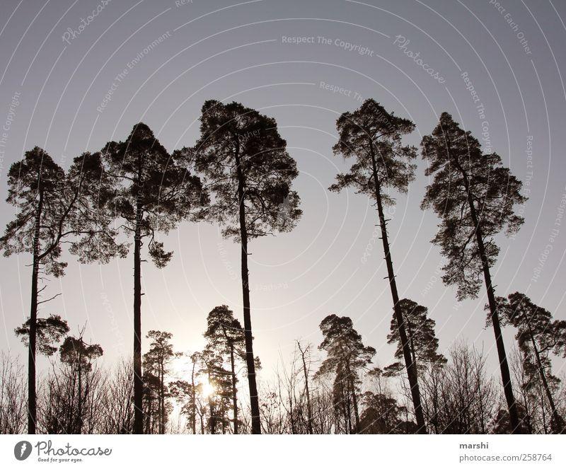 Wächter Himmel Natur Baum Pflanze Sonne Wald Landschaft groß Kitsch gigantisch