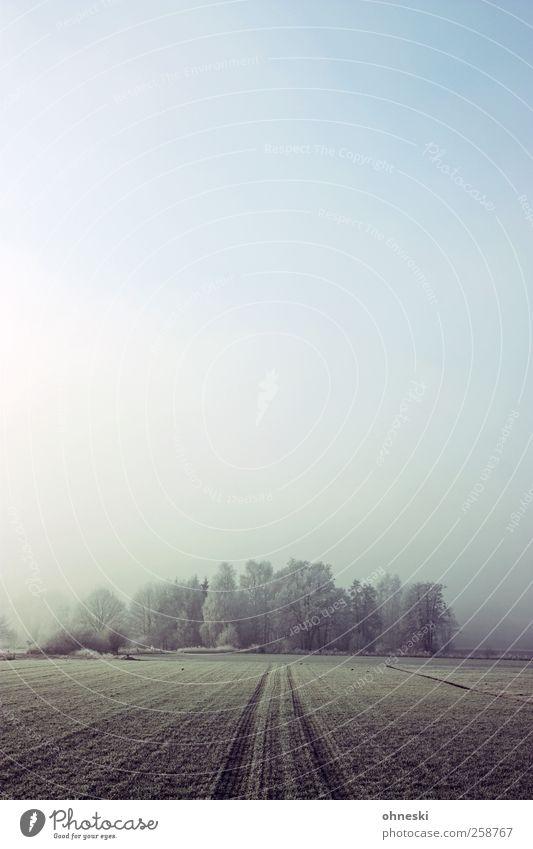 Frost Landschaft Erde Himmel Winter Wetter Nebel Eis Baum Feld Wald kalt Trauer Einsamkeit Ferne Farbfoto Gedeckte Farben Außenaufnahme Morgen
