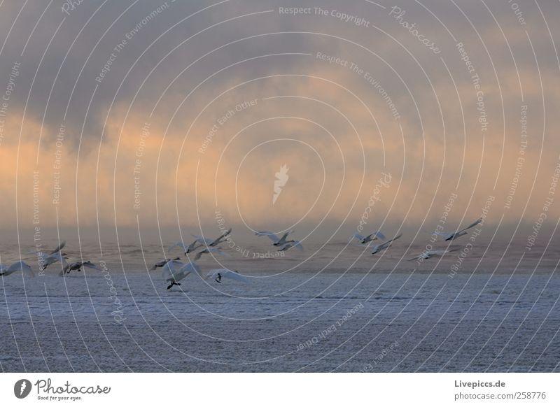 Warum fliegen wir nicht einfach nach Süden? Natur Wasser Wolken Sonnenaufgang Sonnenuntergang Winter Wetter Nebel Küste Seeufer Tier Vogel Tiergruppe Vögel