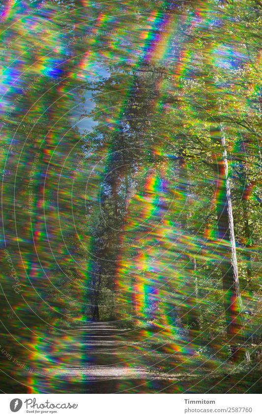 Trau Dich! Umwelt Natur Pflanze Himmel Sonnenlicht Herbst Baum Wald Wege & Pfade Fußweg außergewöhnlich blau braun gelb grün Gefühle Spektralfarbe