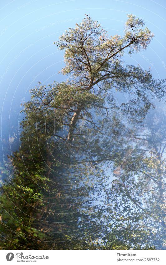 Herbst (2) Umwelt Natur Pflanze Himmel Schönes Wetter Baum Wald natürlich blau grün Gefühle Farbfoto Außenaufnahme Menschenleer Tag Reflexion & Spiegelung