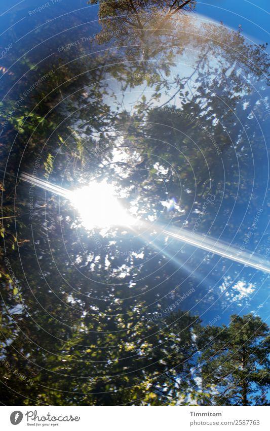 Blauer Himmel Umwelt Natur Pflanze Sonnenlicht Herbst Schönes Wetter Baum Wald leuchten hell blau braun grün Blatt Farbfoto Außenaufnahme Menschenleer Tag Licht