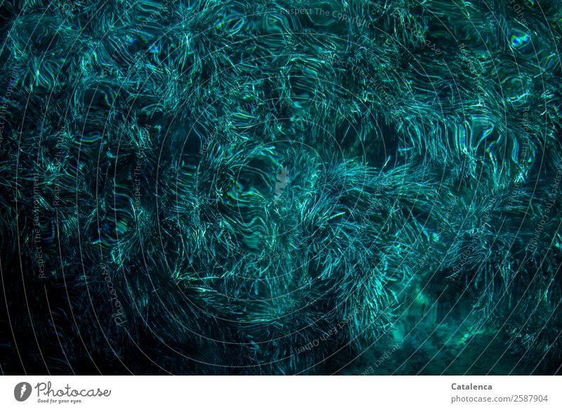 Moody Blue Sommer Meer Natur Pflanze Wasser Blatt Neptungras Algen Meeresgras Wellen Meeresboden Bewegung Wachstum Zusammensein schön maritim nass blau schwarz