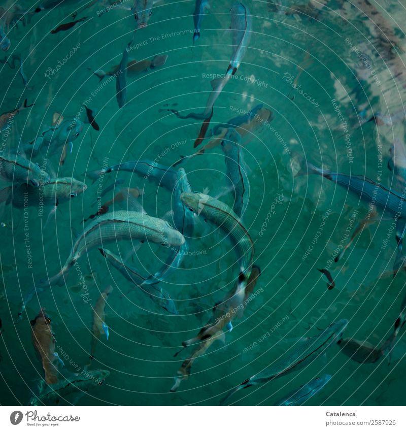 Brandbrasse Angeln Tourismus Sommer Sommerurlaub Meer Fischereiwirtschaft Natur Tier Wasser Wellen Mittelmeer Schwarm Schwimmen & Baden ästhetisch Zusammensein