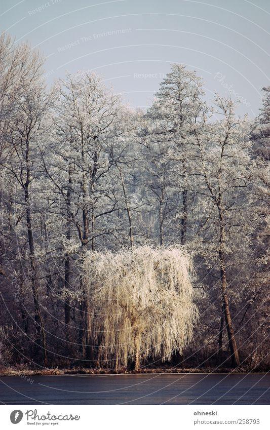 Wintermorgen Landschaft Eis Frost Baum Trauerweide Wald Seeufer Raureif kalt weiß friedlich trösten Einsamkeit Ewigkeit Idylle Farbfoto Außenaufnahme