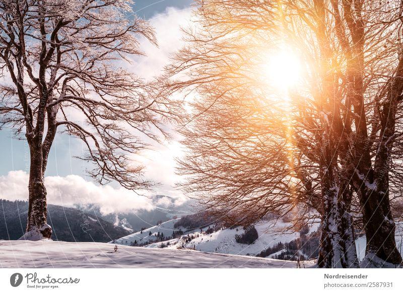 Winter Ferien & Urlaub & Reisen Natur Landschaft Sonne Baum Wolken Berge u. Gebirge kalt Schnee Tourismus wandern Park Eis Nebel Idylle