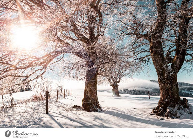 Winter im Schwarzwald Ferien & Urlaub & Reisen Tourismus Ausflug Schnee Winterurlaub wandern Weihnachten & Advent Silvester u. Neujahr Skifahren Natur