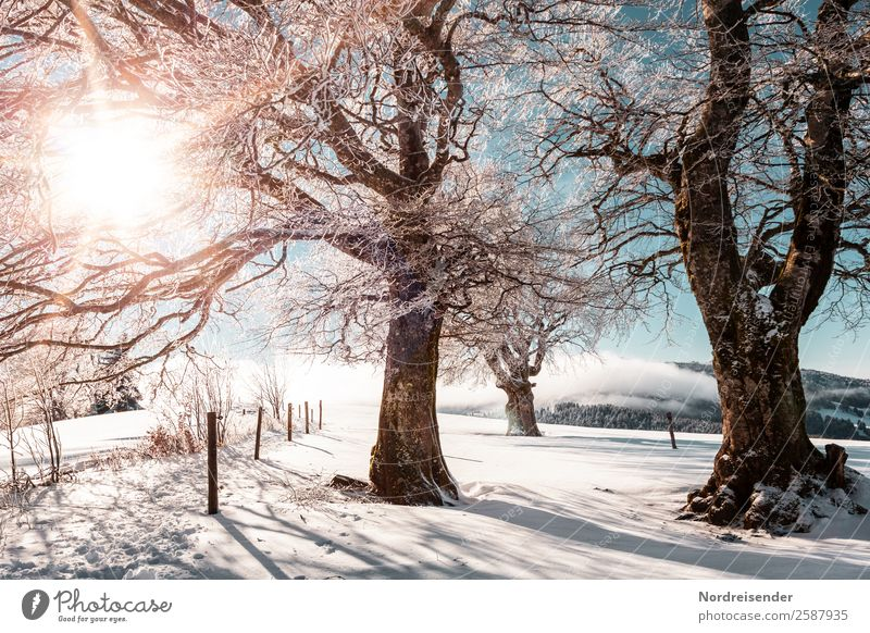 Winter im Schwarzwald Natur Ferien & Urlaub & Reisen Weihnachten & Advent Landschaft Sonne Baum Erholung Leben Schnee Tourismus Ausflug wandern Park Eis Idylle