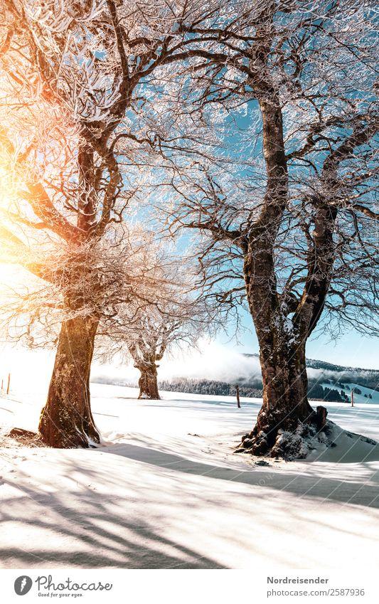 Winter im Schwarzwald Ferien & Urlaub & Reisen Tourismus Schnee Winterurlaub Berge u. Gebirge Natur Landschaft Wolkenloser Himmel Sonne Klima Schönes Wetter Eis