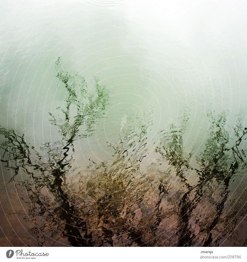 Rhein Umwelt Natur Wasser Pflanze Baum ästhetisch außergewöhnlich einzigartig schön Zufriedenheit Einsamkeit Farbe Perspektive Surrealismus Farbfoto