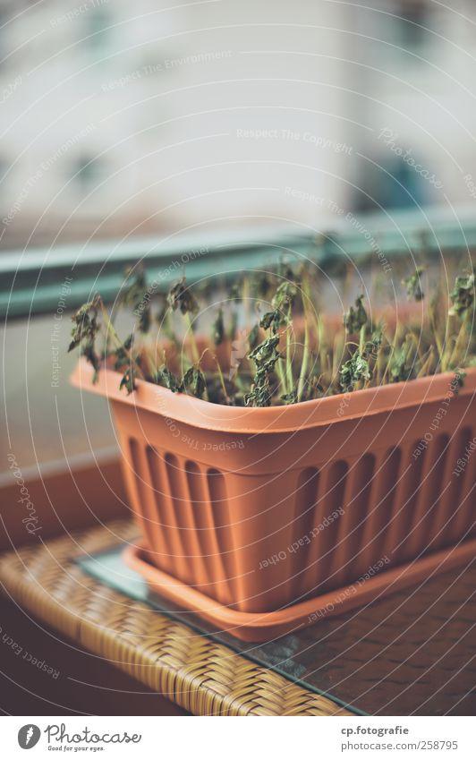 Balkonien im Winter Stadt Pflanze Schönes Wetter Geländer Balkon Blumentopf Nutzpflanze Tisch Glastisch