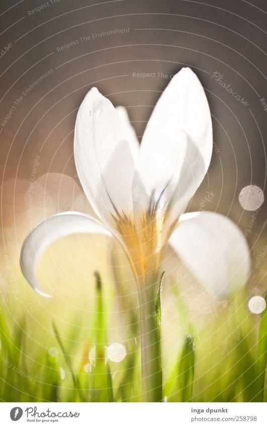 97 - 1 Jahr photocase!!! Umwelt Natur Frühling Klima Schönes Wetter Pflanze Gras Blatt Blüte Garten Park Wiese Duft leuchten ästhetisch glänzend schön Gefühle