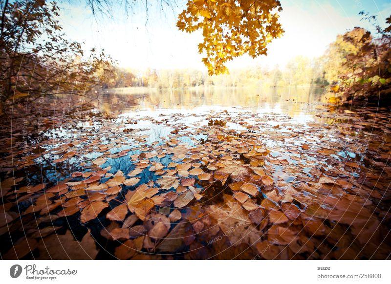 Seeblick Natur Wasser schön Baum Pflanze Blatt gelb Herbst Umwelt Landschaft Wetter Klima authentisch Idylle Schönes Wetter