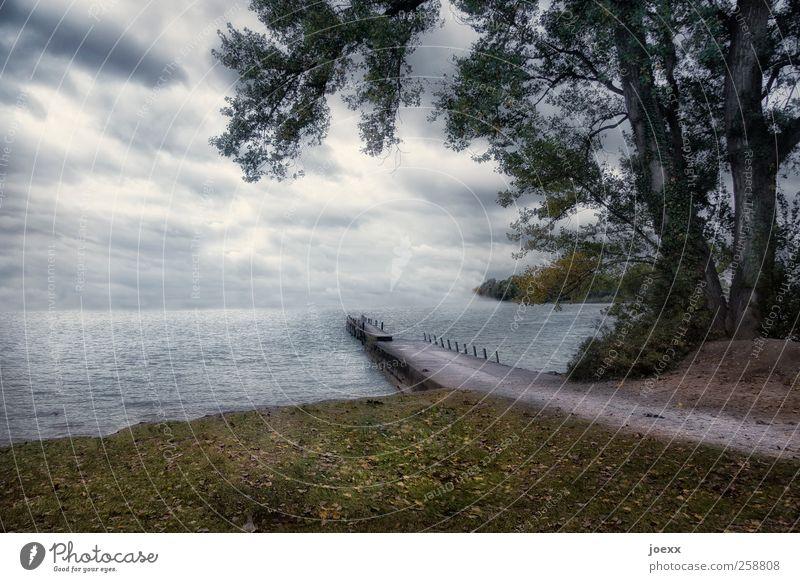 Seeweg Natur Wolken Horizont Sommer Wetter schlechtes Wetter Baum Wiese Seeufer Wege & Pfade dunkel braun grau grün weiß kalt Steg Farbfoto Gedeckte Farben