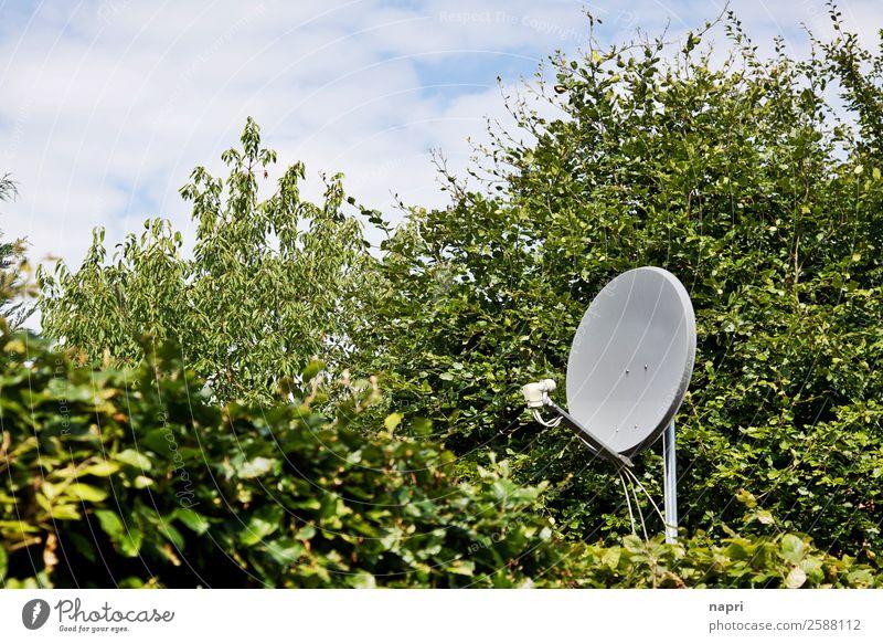 Satellitenschüssel Satellitenantenne Technik & Technologie Telekommunikation Informationstechnologie Sträucher Hecke Unendlichkeit gruselig nerdig grau grün