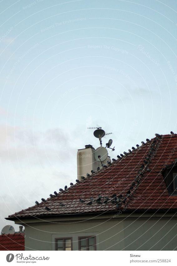 Lieber Tauben auf dem Dach als einen Spatz in der Hand. Himmel Wolkenloser Himmel Schönes Wetter Haus Dachrinne Schornstein Antenne Satellitenantenne Vogel