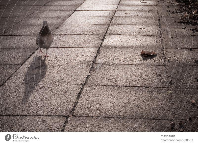 wird die zeit wirklich durch die sekunden zerteilt? Stadt Blatt Tier Einsamkeit braun gehen Platz trist Taube