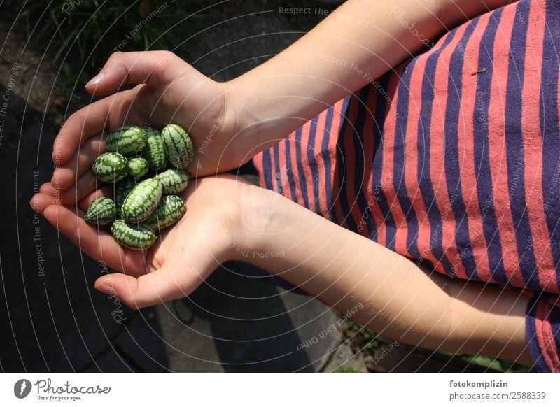ernte Kind Hand Gesundheit Lebensmittel Essen natürlich Frucht Zufriedenheit Kindheit festhalten Ernte rein Sammlung zeigen exotisch Appetit & Hunger
