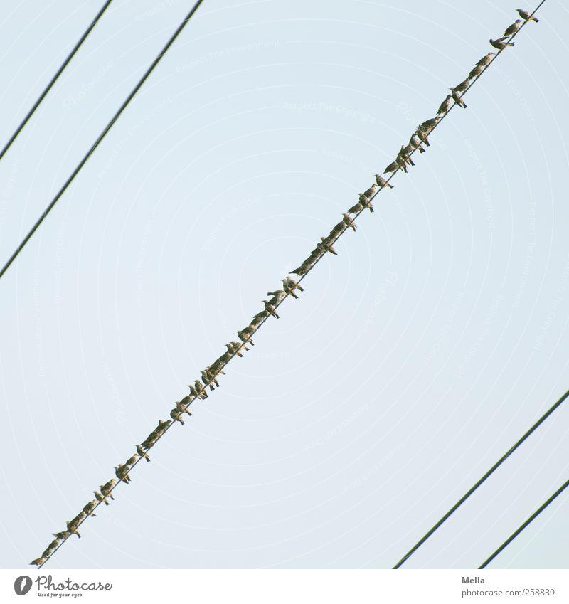 Birds Himmel Natur blau Tier Umwelt klein Luft Linie Vogel Zusammensein sitzen natürlich Kabel niedlich Tiergruppe viele