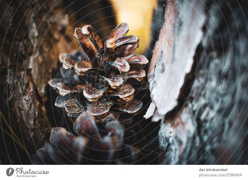 Der Herbst und seine Früchtchen XXI Natur Pflanze Baum Wald ästhetisch Gefühle Kraft Farbfoto Außenaufnahme Menschenleer Textfreiraum rechts Tag Unschärfe